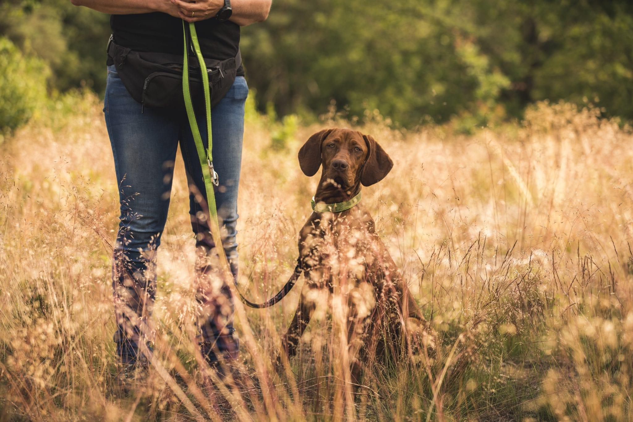 Giardia mensen behandeling - Giardia bacterie bij honden