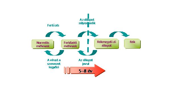 a papillomavírus szó meghatározása