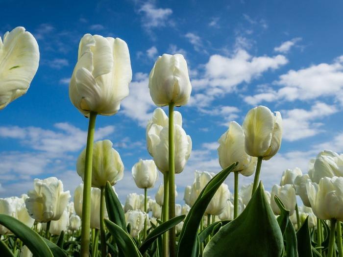 a föld fehér szárában méregtelenítő kezelés 5 nap