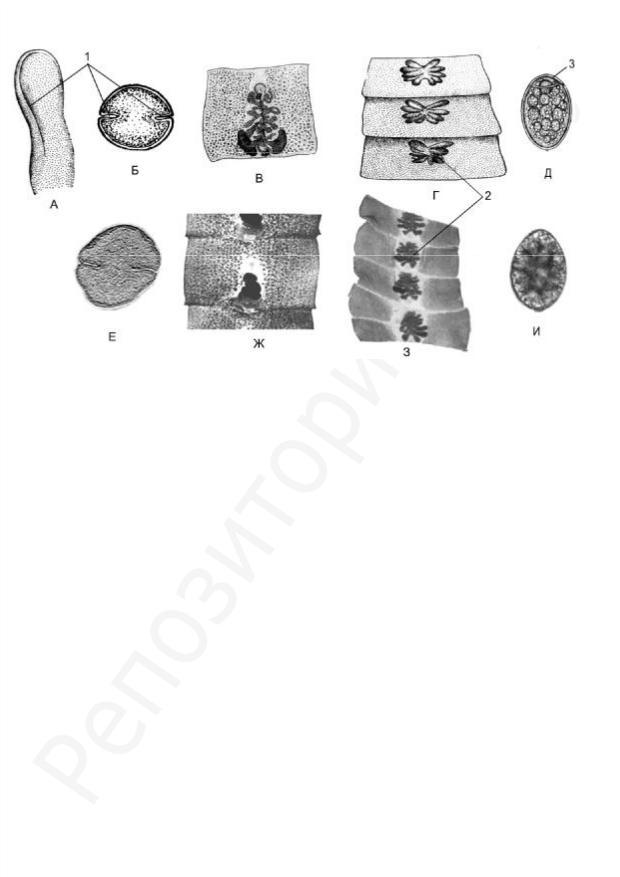 Parazita botok - Tartalomjegyzék