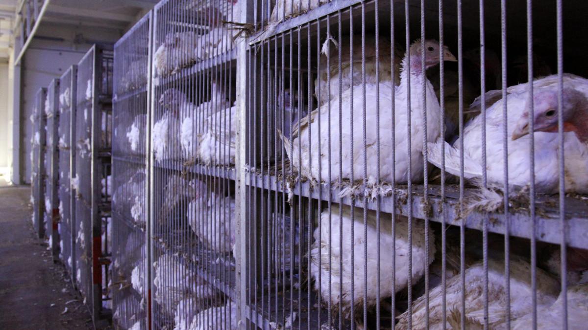 madárinfluenza fertőzési útvonalai gyógymódok a férgek gyermekeknél