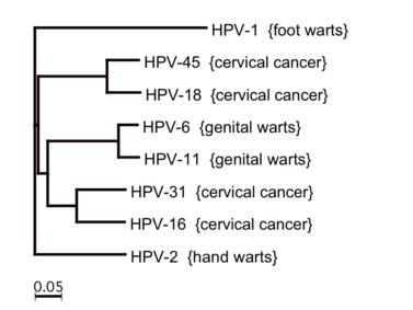 Milyen problémákat okozhat a HPV nőkben?   notafa.hu