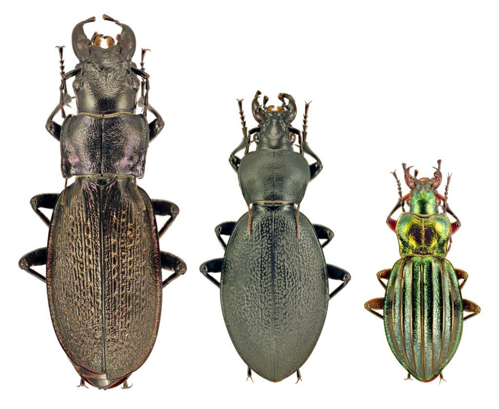 Szovjet rovarok
