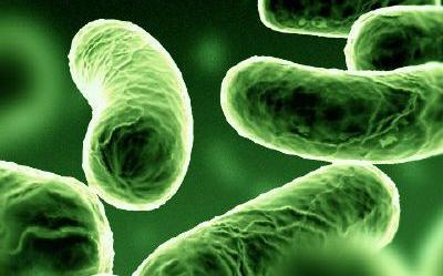 egysejtű baktériumok
