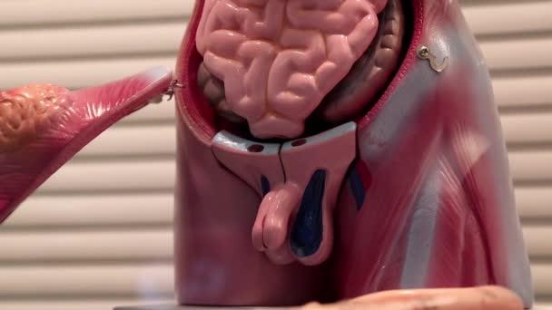 helminták a belső szervekben