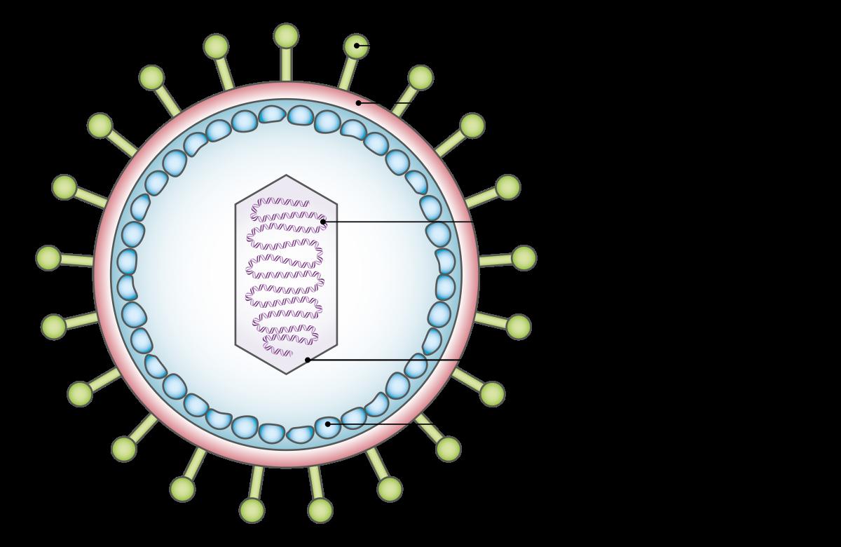 gége papillomatosis vakcina