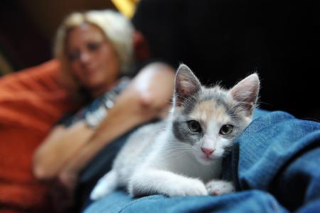 a macska férgeket tesz