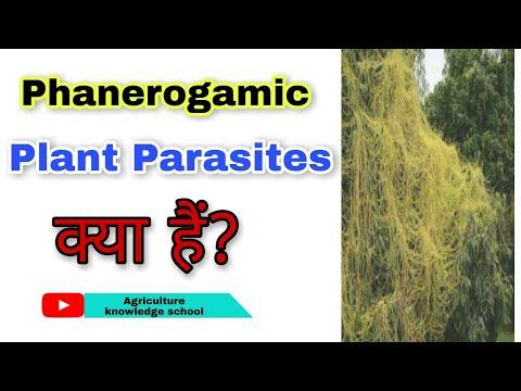 Parazitákból származó polioxidónium, A betegség jellemzői