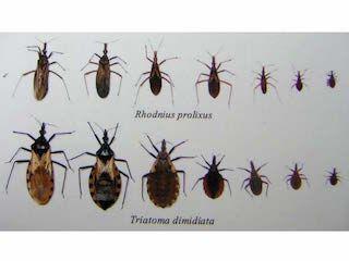 papilloma vírus a tünetektől