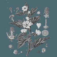 a papilloma eltávolítása oxolinos kenőccsel