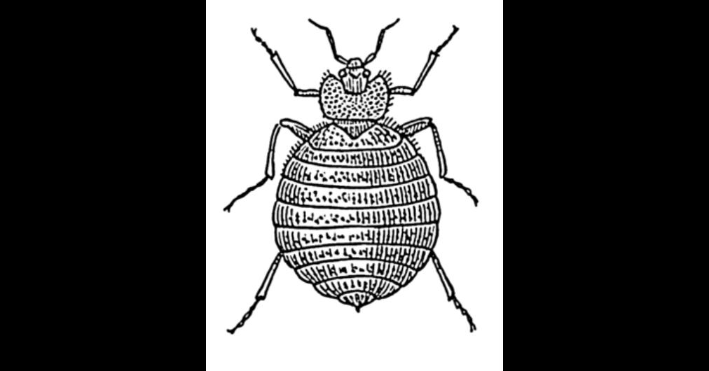 számú paraziták