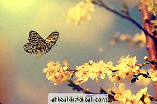 A pillangók parazitái, Pillangók paraziták