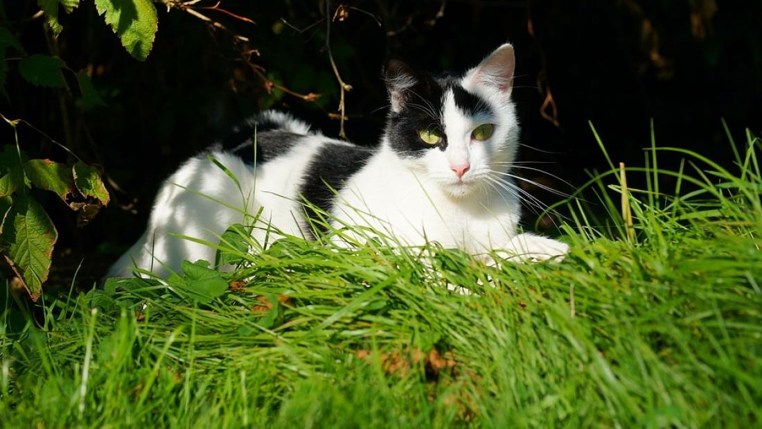 Tudja-e, hogy miért kaparja el a macska a piszkát?