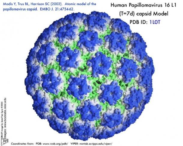 humán papilloma HPC giardien bei katzen behandeln
