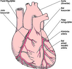 A szívbetegség 12 furcsa jele - HáziPatika