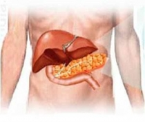 Az ösztrogén elősegítheti a szájrák kialakulását?