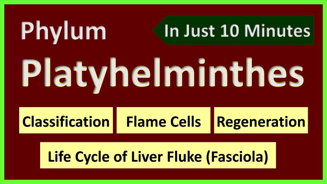 platyhelminthes féreg pelyhes cernagilis elleni gyógyszer vény nélkül