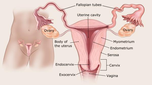 endometrium rák szövettani típusai