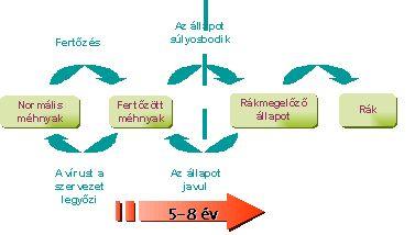 hpv alternatív kezelés