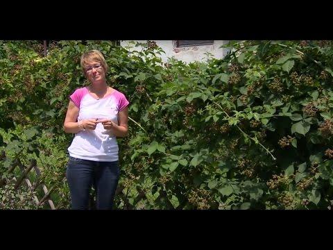 hogyan lehet megszabadulni a fa parazitáktól