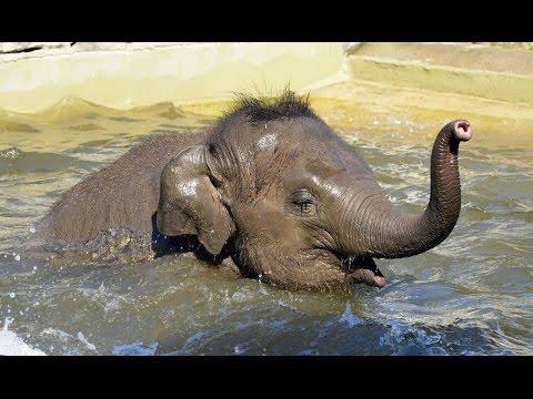 Plázs: Új lehetőség az elefántkór gyógyítására | notafa.hu