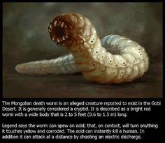 a féreg pinworm a nemi szemölcsök eltávolítására szolgáló gyógyszerek