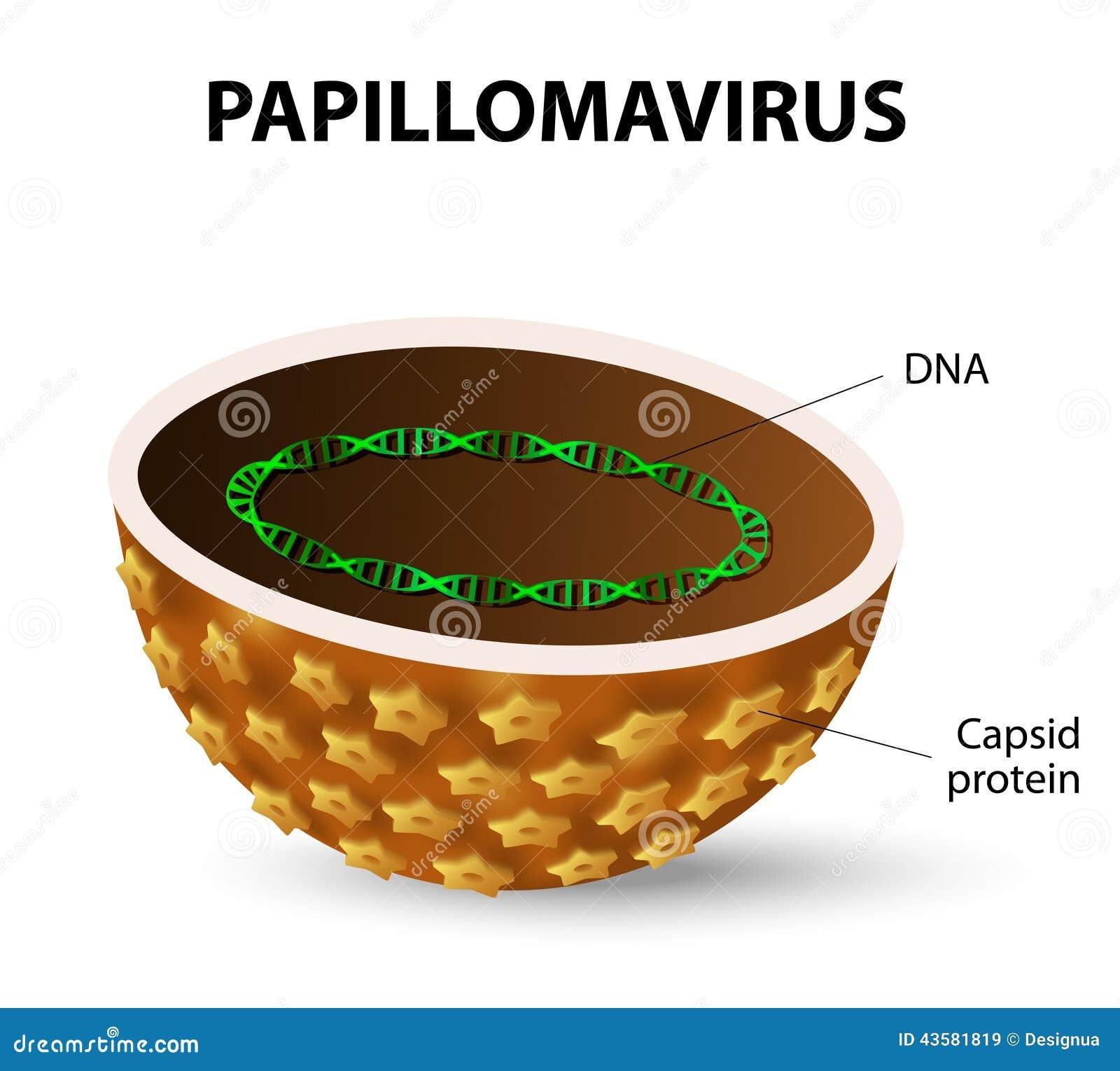 papilloma vírus com