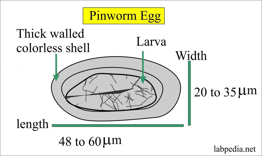 torok papilloma vírussal a férgek teljes megsemmisítése