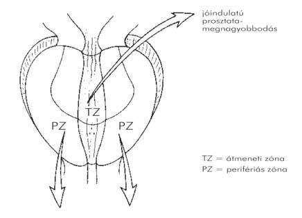immunomax condyloma kezelés invazív helmint vérszegénység