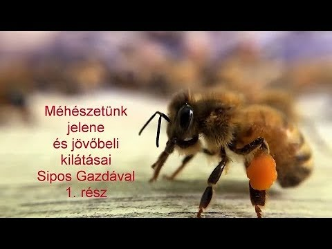 a méh paraziták kezelése