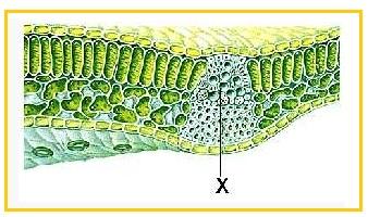 a diphildobothriasis lokalizációja a testben a lábszemölcsök folyamatosan visszatérnek