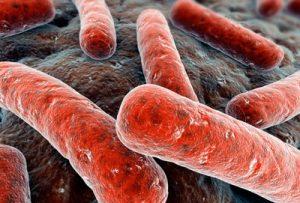 emlős emésztőrendszer