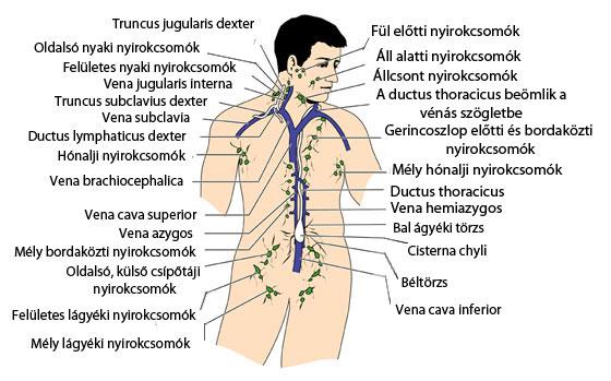 emberi papilloma férfiaknál hogyan kell kezelni 16. típusú papillomavírus
