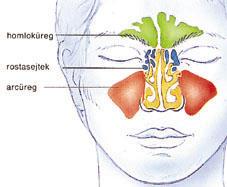 az orr rosszindulatú daganata