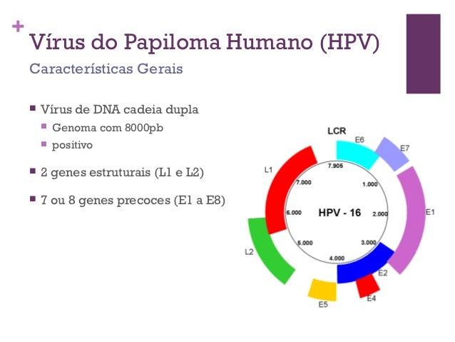 A férfiak HPV-fertőzése, a visszafertőzés veszélye