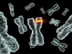 Immungenomika és tumor immunológia - Két határterület mezsgyéjén