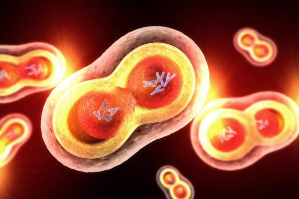 endometrium rák msi h