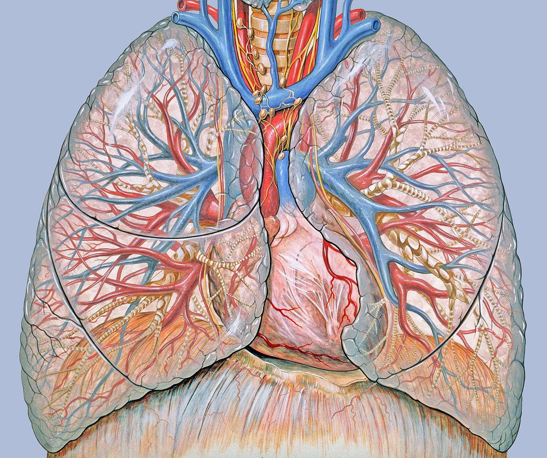 vastagbél májrák tüdő