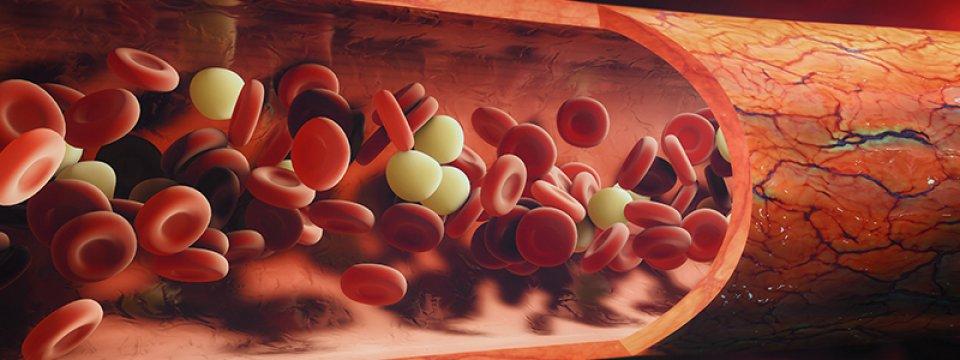 A paraziták hatása az étvágyra - Vitaminok