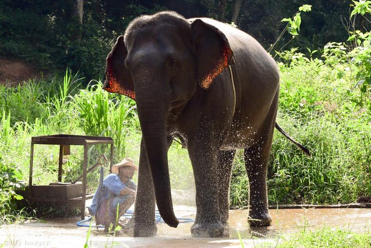 Elefánt ember képmutatók és paraziták