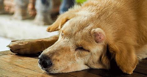 szájüregi rákos kutyák