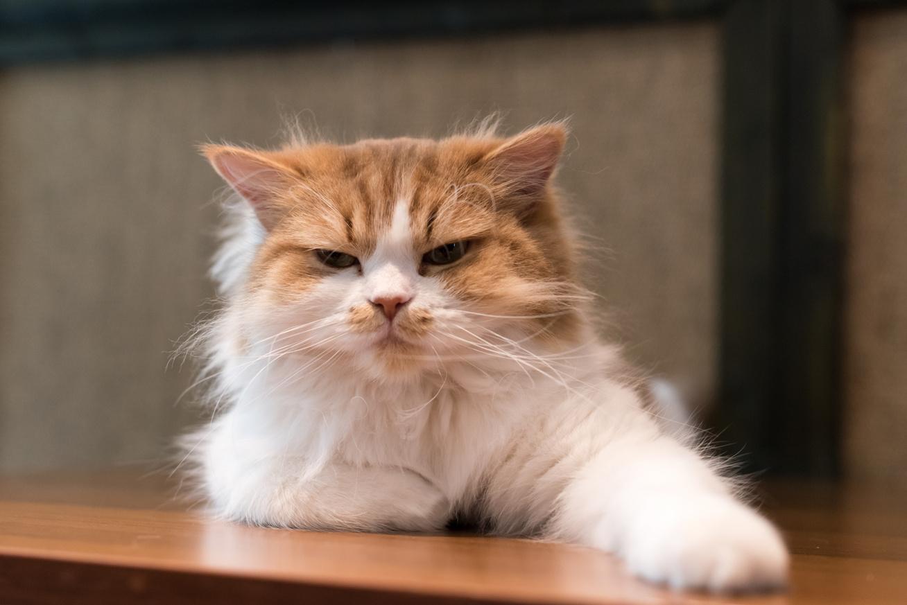 16 jel, amiből kiderül, boldog-e a macskád