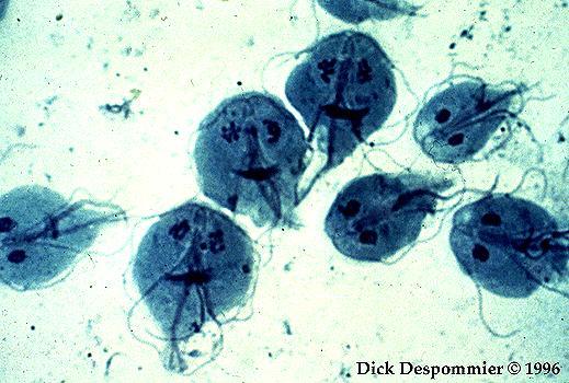 Cryptosporidium and giardia cysts OKI   Alapfeladataink