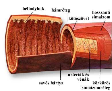hashártya rák bél