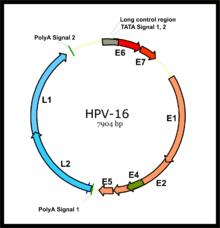 vírus és mobitelu parazita fertőzés érzései