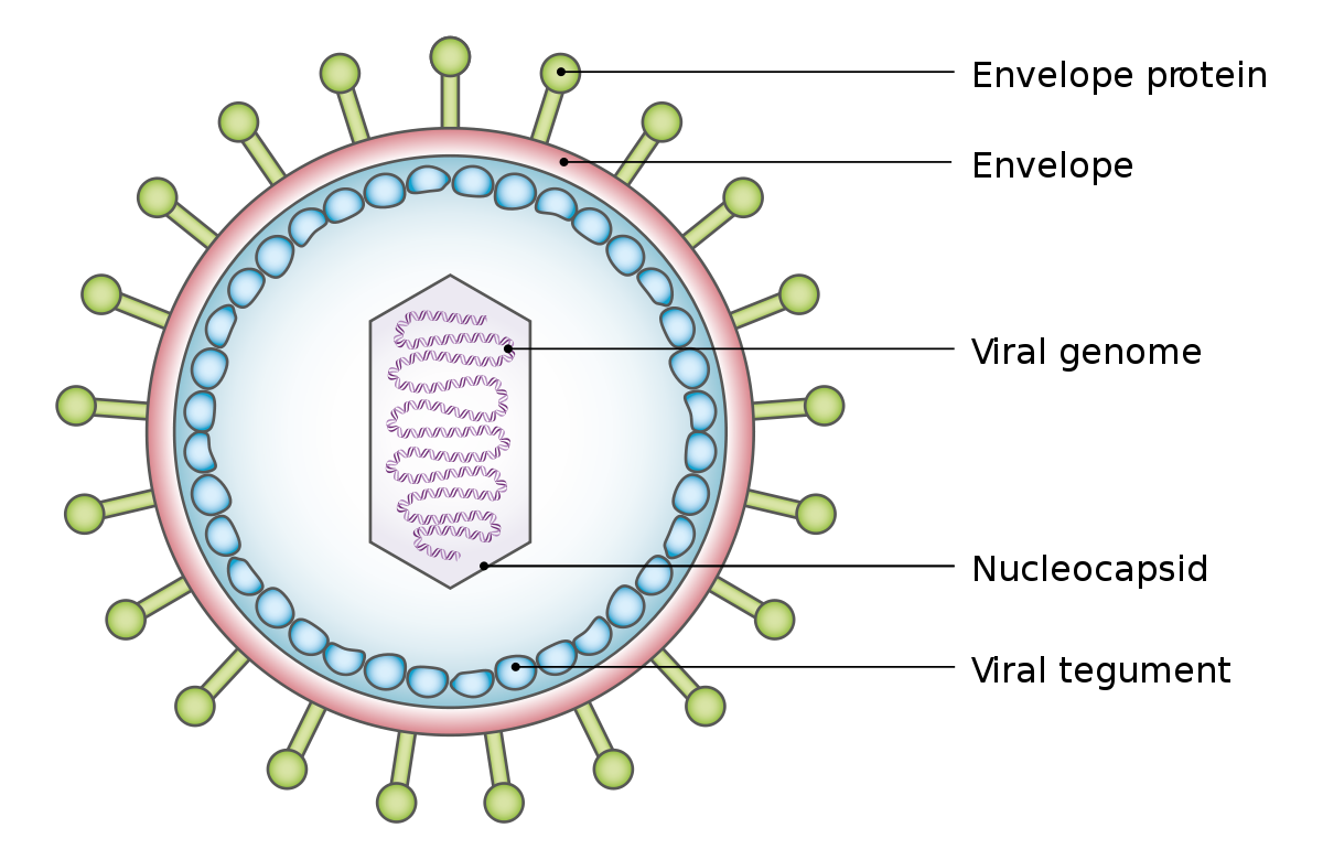 A HPV-diagnosztika aktuális kérdései