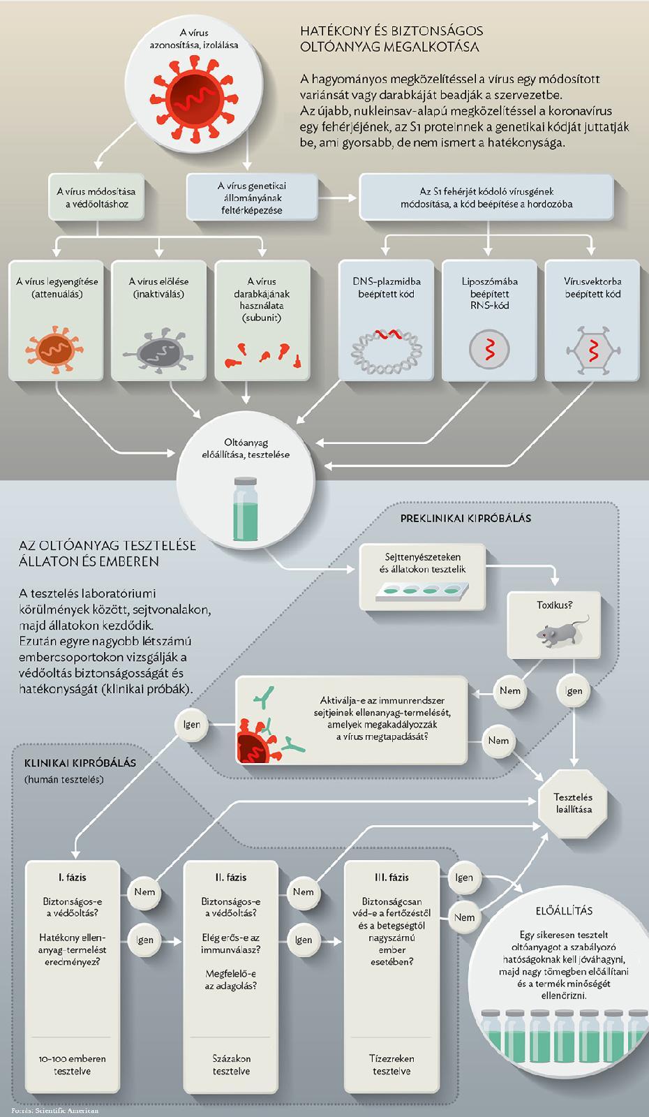 humán papillomavírus vakcina francia nyelven