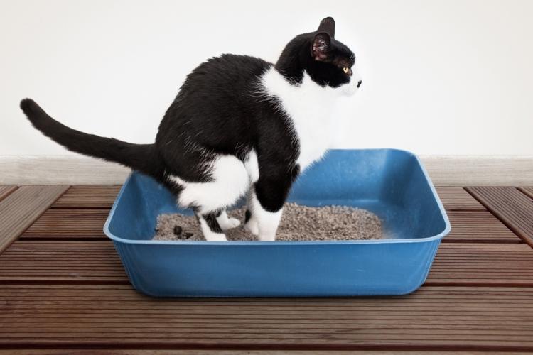 macska tabletták férgek után