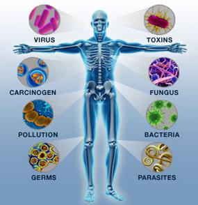 Méregtelenítés II. | TermészetGyógyász Magazin