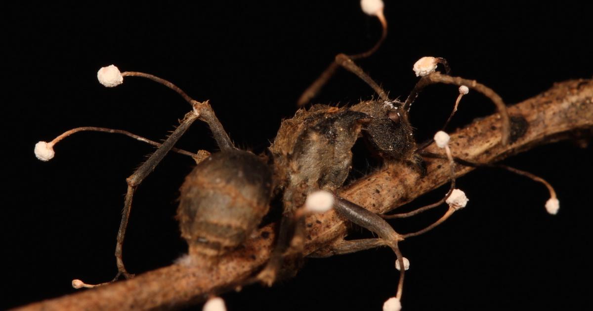 parazita rovar 7 nap vastagbél méregtelenítő étrend